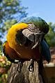 Curious Macaw.jpg