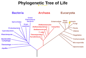 Character evolution - A phylogenetic tree