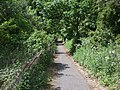 Cycleway-Footpath, North Cove - geograph.org.uk - 440543.jpg