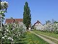 D-BW-Friedrichshafen - Landschaftsschutzgebiet Haldenberg.jpg