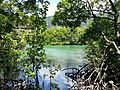 Daintree National Park, Queensland 07.jpg