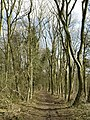 Dale Plantation Woodland - geograph.org.uk - 713873.jpg