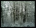Daystar Frost Colors Glottertal - Mythos Black Forest Photography - panoramio (6).jpg