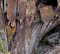 Decay and rust (3963144734).jpg