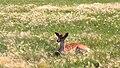 Deer Meadow Farms Corn Maze, Deacon Rd, Birds Hill (502026) (16377007482).jpg