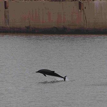 Delfines-gijon