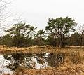 Delleboersterheide – Catspoele Natuurgebied van It Fryske Gea. Omgeving van Catspoele 003.jpg