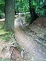Denzlinger Wald - panoramio (4).jpg