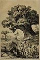 Die Pflanzendecke der Erde - populäre Darstellung der Pflanzengeographie für gebildete Naturfreunde (1859) (20912740856).jpg