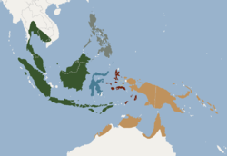 Distribution of Macroglossus minimus.png