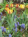 Dixon Gardens Memphis TN 2014-04-06 108.jpg