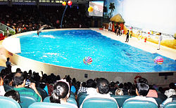 Dolphin show at Dubai dolphinarium, September 2012.jpg