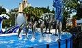 Dolphins in Seaworld, Orlando - panoramio.jpg