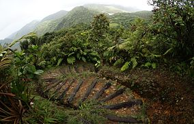 Dominica Hiking Path.JPG