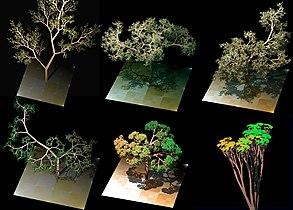 Dragon trees.jpg