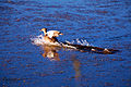 Duck landing.jpg