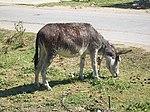 E8004-Milyanfan-donkey.jpg