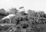 ETH-BIB-Termitenhügel-Kilimanjaroflug 1929-30-LBS MH02-07-0511.tif