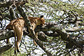 Eastern Serengeti 2012 06 01 3380 (7522720548).jpg