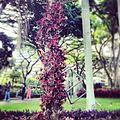 Ecocolumna dos.jpg