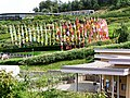 Eden Project - geograph.org.uk - 1701066.jpg