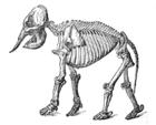 Endoskeleto de elefanto