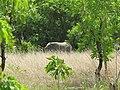 Elephant dans la savane.jpg