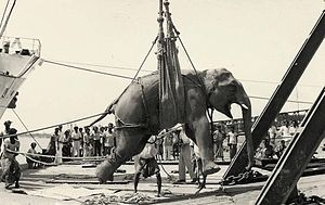 Port of Chittagong - Elephant loading at Chittagong Port in 1960