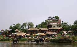 Elephants, Lumbini.jpg