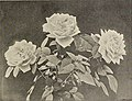 Ellwanger and Barry's supplementary catalogue - 1896 (1896) (21092096068).jpg