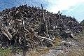 Empilement de souches de pins après désouchage d'une coupe rase 2018 Landes de Gascogne 04.jpg
