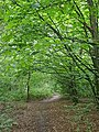 Epping Forest 20170727 112239 (49374696521).jpg