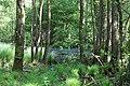 Erlenbruch Langwiesenholz 02.jpg