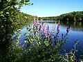 Etangs de Commelles dans la forêt de Chantilly, près de Coye-la-Forêt (60).jpg