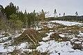Eventyrskog hogget 11 km folkestier Øverbymarka Mjøsen skog blå rute mann.jpg