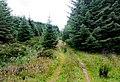 Eweslees Knowe - geograph.org.uk - 1413935.jpg