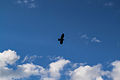 Fåglar-3 (8941148264).jpg