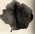 FMIB 52577 Leptogorgia Agassizii (a gorgonia).jpeg