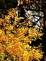 Fall color detail, Wallowa-Whitman National Forest (26195908264).jpg