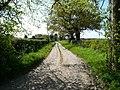 Farm Track - geograph.org.uk - 1272275.jpg
