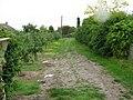 Farm track between footpath and Felderland Lane - geograph.org.uk - 1581585.jpg