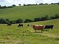 Farmland, Radnage-Chinnor - geograph.org.uk - 884895.jpg