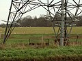 Farmland through a pylon - geograph.org.uk - 300181.jpg