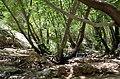 Fars - Kamfirouz - The lost paradise (Beheshte Gomshodeh) - panoramio.jpg