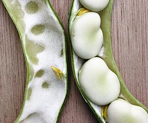 Vicia faba - Broad beans in the pod