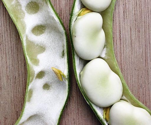 Fava beans 1