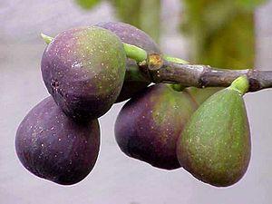 Aydın Province - Famous Aydın figs