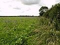 Field-side Hedgerow - geograph.org.uk - 484499.jpg