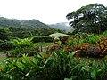 Finca Esperanza Verde - Near Matagalpa - Nicaragua - 01 (31482157232).jpg