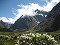 Fiordland National Park, New Zealand.jpg